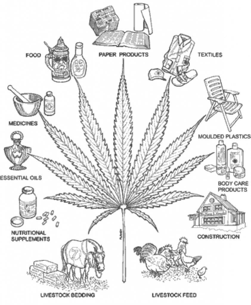 The many uses of hemp.